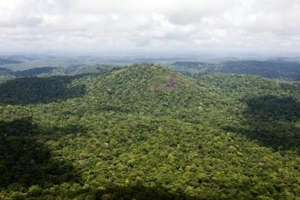 Amazonie: face à la déforestation, le cri d'alarme des Guarani-Kaiowa | Biodiversité & Relations Homme - Nature - Environnement : Un Scoop.it du Muséum de Toulouse | Scoop.it