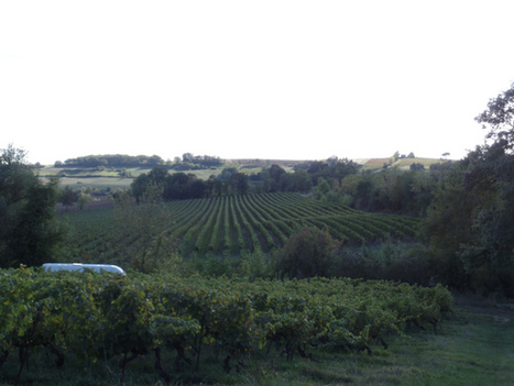 Vigne et vignoble | The Blog's Revue by OlivierSC | Scoop.it