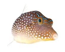 Portrait de la biodiversité marine - institut francais de suède   La plongée sous-marine   Scoop.it