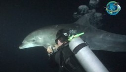Amazing video of dolphin seeking help from scuba divers - AMERICAblog (blog) | Our Ailing Oceans | Scoop.it