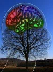 Brain Study May Shed Light on Autism, Schizophrenia, and other Disorders | Intellectual Disability | Scoop.it