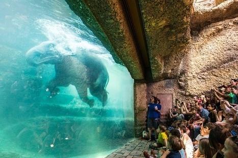 Les zoos, bons ou mauvais pour les animaux? | T6 - Environnement, style de vie, animaux | Scoop.it