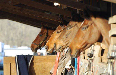 Horse People Aren't Like Other People, presented by Total Saddle Fit | Horses and Equine Related Info | Scoop.it