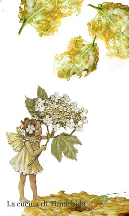 I sette doni dei Fiori di Aktaia. Frittelle di fiori di sambuco | Cucina e Salute | Scoop.it