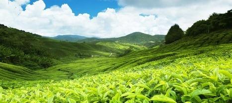 Vacances de Noël au Sri Lanka avec Shanti Travel | E-tourisme et nouvelles tendances du Tourisme | Scoop.it