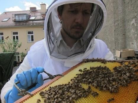 Bayers heile Bienen-WeltHonig aus München   Honig aus München   Bienen   Scoop.it
