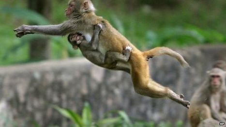 Monkeys chewing on fiber optic cables 'hinder India internet drive' | EconMatters | Scoop.it