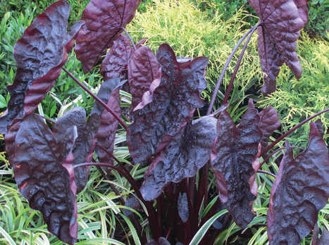 13 New Tropical Plants For 2014 | botany | Scoop.it