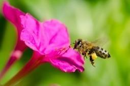 Caffeine Increases Memory for Humans and Honeybees | Weiterbildung | Scoop.it