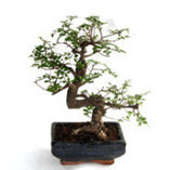 Lucky Green Plants for Corporate Gifts | Corporates Gifts Online In India | Scoop.it