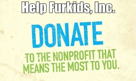 Help spread the word about #GAGives – a 24 hour online giving event for #nonprofits in GA – Furkids | Seo Marketing and Curation | Scoop.it