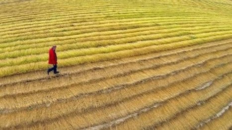 High suicide rate highlights plight of French farmers - FRANCE 24   binNotes France - Wine & Culture   Scoop.it