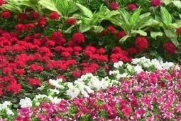 2014 Lalbagh Independence Day Flower Show from 8th August | Bangalore Tourist Places | Scoop.it