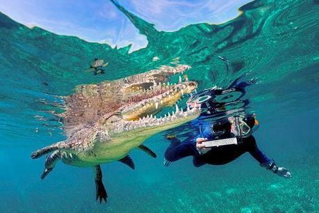 This Actually Happened: Family Snorkels With Croc in Cuba | SA Scuba Shack | Scoop.it