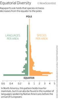 Guerra de palabras: La paradoja de los idiomas - Bitnavegantes   desdeelpasillo   Scoop.it