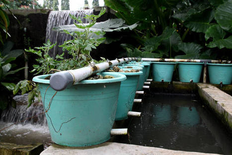 Indonesia - Advancing aquaponics development in Indonesia | Aquaponics in Action | Scoop.it