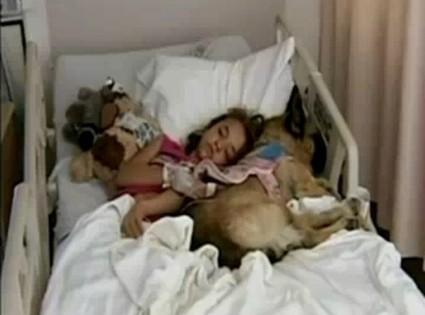 Perros-psicólogos para los niños de Newtown - Intereconomía | Perros de hoy | Scoop.it