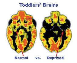 Early Childhood Brain Insights: BRAIN INSIGHTS TO SHARE: Growing a Brain!   Early Brain Development   Scoop.it