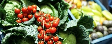 Trends gespot: Gezondheidswetenschap op het menu | Foodservice | Scoop.it