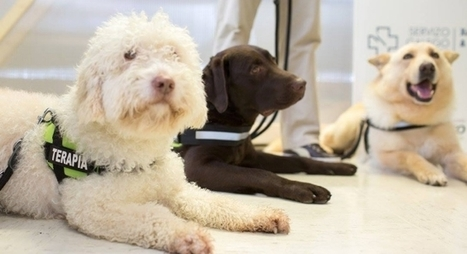 Tres perros participarán en una terapia pionera para ayudar a niños con autismo o daño cerebral  - ANTENA 3 TV | Educación | Scoop.it