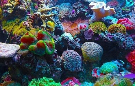 #FF World's #oceans facing biggest coral reef die-off ever, scientists warn #Aluna #Kogi | Messenger for mother Earth | Scoop.it