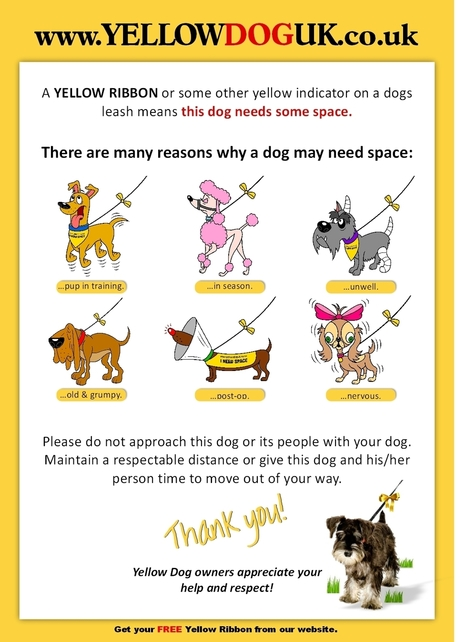 Yellow Dog UK - Some Dogs Need Space | Dogs | Scoop.it