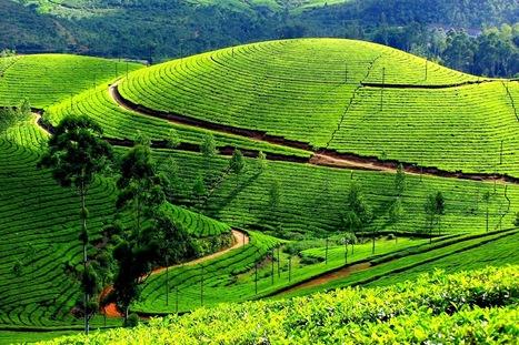 Best Kerala Honeymoon Packages | Kerala Backwater India | Scoop.it