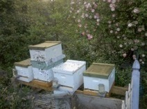 Bay Area Beekeeping | Organic Farming | Scoop.it