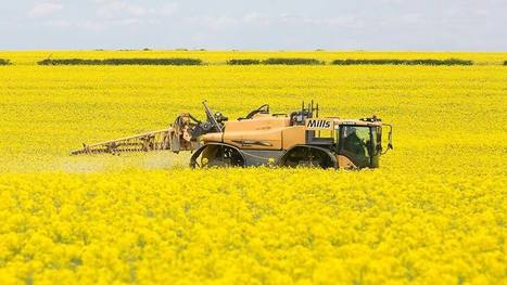 Defra rejects NFU application to use neonicotinoids on OSR - Farmers Weekly | Agrarforschung | Scoop.it