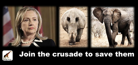Hillary Rodham Clinton's new cause: combating elephant poaching | Wildlife Trafficking: Who Does it? Allows it? | Scoop.it