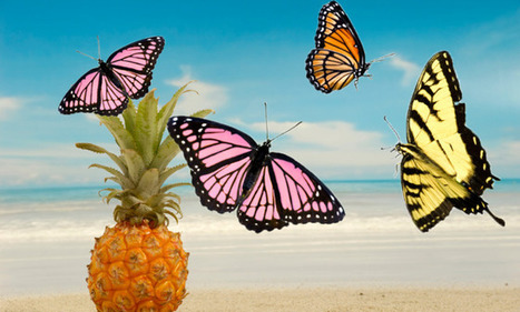 The curious linguistic history of pineapples and butterflies | terminology | Scoop.it