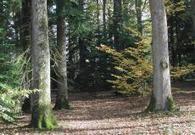 Forêt : la compétition entre arbres est féroce… mais prévisible | Irstea | AGRONOMIE VEGETAL | Scoop.it