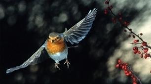 Electronics' noise disorients migratory birds | DESARTSONNANTS - CRÉATION SONORE ET ENVIRONNEMENT - ENVIRONMENTAL SOUND ART - PAYSAGES ET ECOLOGIE SONORE | Scoop.it