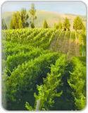 Inicio - Guia del Vino Colombia   Todo sobre vinos   Scoop.it