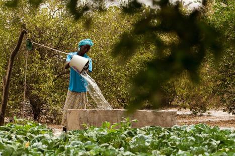 L'UE s'engage dans la lutte contre les pesticides en Afrique | Questions de développement ... | Scoop.it