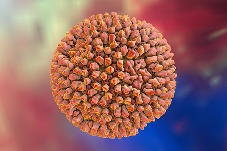 A common virus could help fight liver cancer and hepatitis C | Virology News | Scoop.it