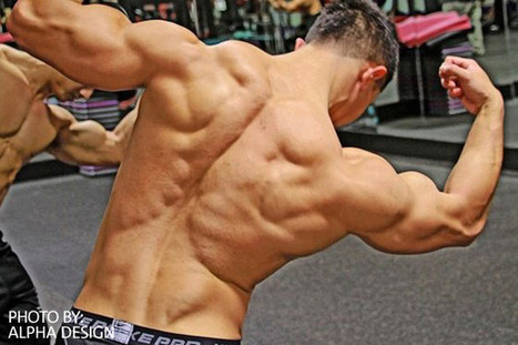 The Basics: Fundamentals To Lean Muscle Mass | Cut and Jacked | Building Muscle | Scoop.it