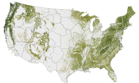 Where the Trees Are : Image of the Day | Data Visualization for Social Media | Scoop.it