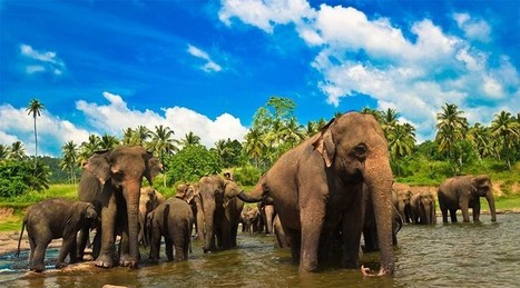 The 5 Best Things to Do in Sri Lanka   Top Holiday Destinations in the World   Scoop.it