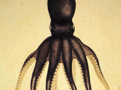 What It Feels Like to Be an Octopus - Facts So Romantic - Nautilus | Food for Foodies | Scoop.it