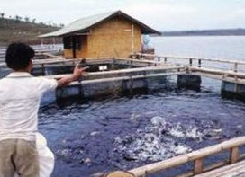 Thai aquaculture industry vows to stop illegal labour - Feed Machinery | Aquaculture Directory | Scoop.it