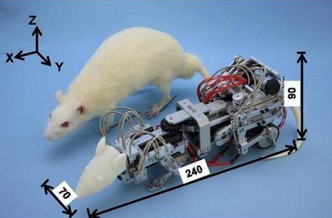 Des rats de laboratoire stressés par un robot | Actualités robots et humanoïdes | Scoop.it