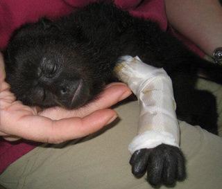 Heska's Belize Wildlife and Referral Clinic: - The Belize Forums | Belize in Social Media | Scoop.it