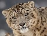 Hallan la primera especie de felino que habitó la Tierra   4º de ESO. Bloque 3: La evolución de la vida   Scoop.it