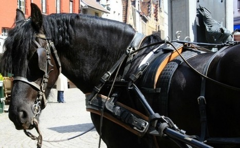Success! Horse-Drawn Carriage Rides End in Montreal | Vegan going mainstream | Scoop.it