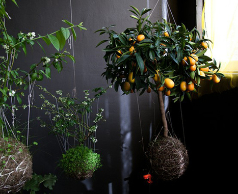Kokedama Japanese String Gardens | A Love of Japanese Gardens | Scoop.it