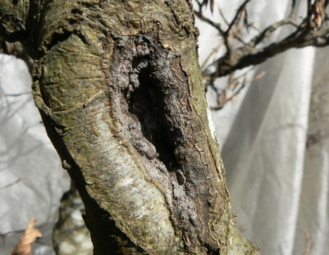 Aider une cicatrice à se refermer | Bonsai365 | BONSAI365 | Scoop.it