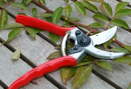 (IT) – TECNICHE AVANZATE di giardinaggio | zr-giardinaggio.it | About gardening | Scoop.it