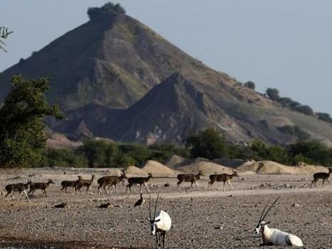 'Arabian Ark' is saving UAE wildlife from extinction | Green Prophet | Arabian Peninsula | Scoop.it