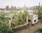 INTERVIEW: Rob Stephenson on Capturing the Farms of New York City – Next American City | Sustainable Futures | Scoop.it